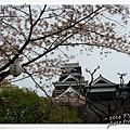 熊本城22.jpg