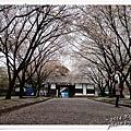 熊本城32.jpg