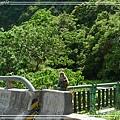 花東縱谷15.jpg