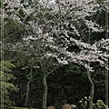 宮島02.jpg
