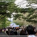 日立海濱粉蝶花09.jpg