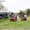 日立海濱粉蝶花23.jpg