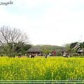 日立海濱粉蝶花27.jpg