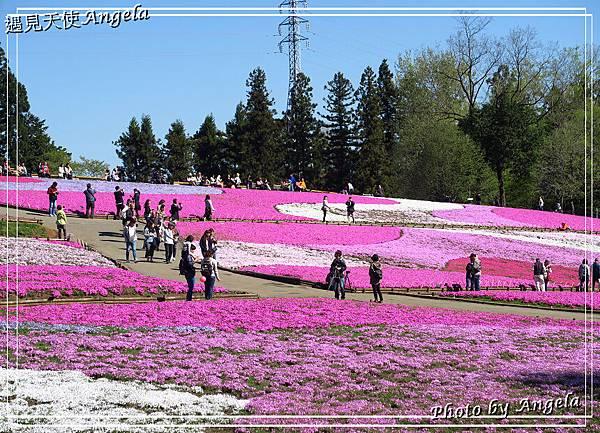 秩父羊山公園14.jpg