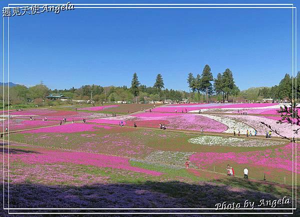 秩父羊山公園17.jpg