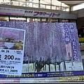 足利花卉花園03.jpg