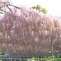 足利花卉花園07.jpg