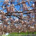 足利花卉花園08.jpg