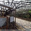 足利花卉花園11.jpg