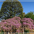 足利花卉花園13.jpg
