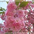 足利花卉花園26.jpg