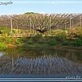 足利花卉花園28.jpg