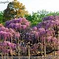 足利花卉花園36.jpg