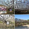 足利花卉花園39.jpg