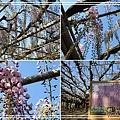 足利花卉花園40.jpg