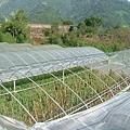 柯羅莎颱風後損毀的溫室設備