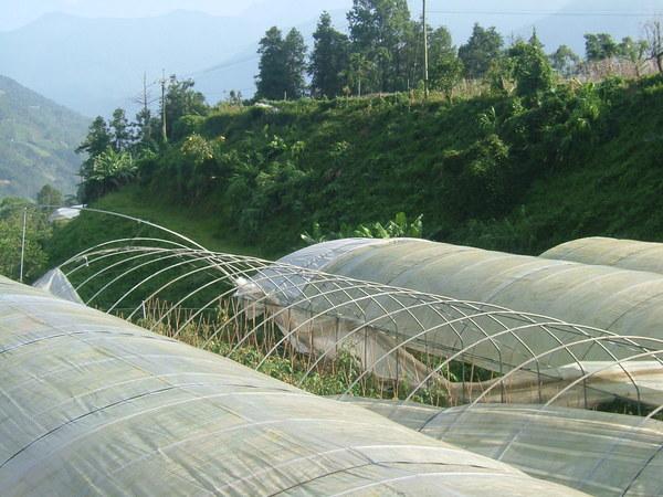 柯羅莎颱風後