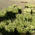 2007年整理好的玫瑰-比浪卡