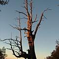 玉山國家公園景觀(夫妻樹)