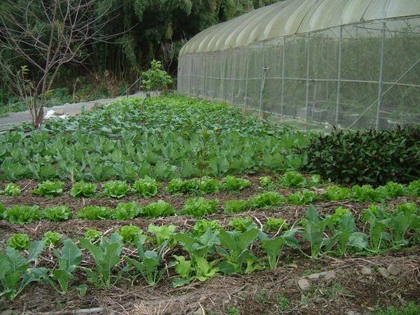 逸軒園冬天菜園有十種以上的菜