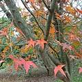 2007年小公園的楓樹
