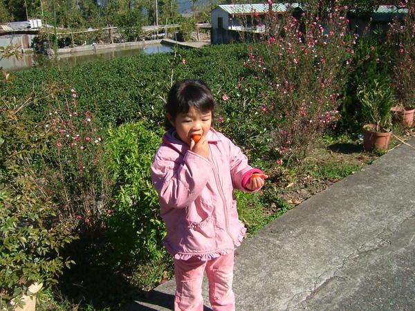 小依一邊曬太陽一邊吃蕃茄