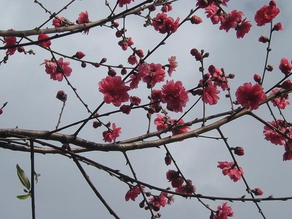 08.03.10杏花