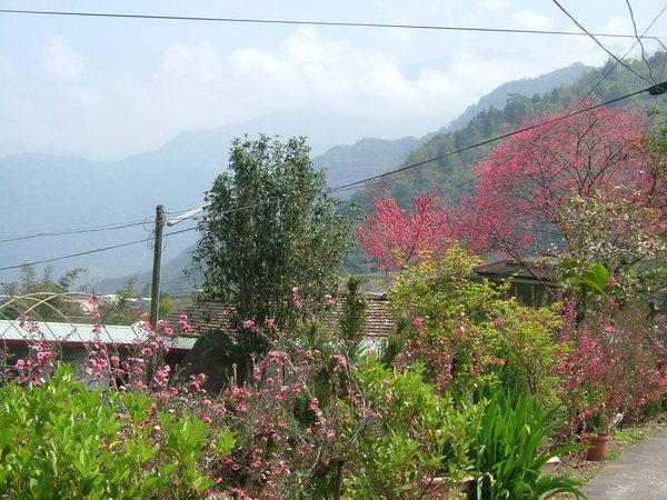 08.03.21院子前的紅花