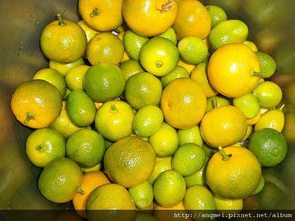 各種品種柑桔.JPG