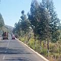 08.11.24荒野植被路樹