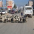 08.11.24大理鶴慶縣城的羊群