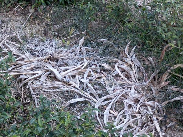 09.01.12草地上的白霜