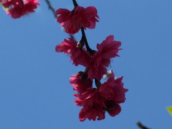 09.02.13杏花