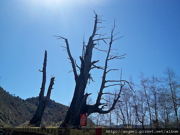 2011.2.52011.2.5塔塔加夫妻樹