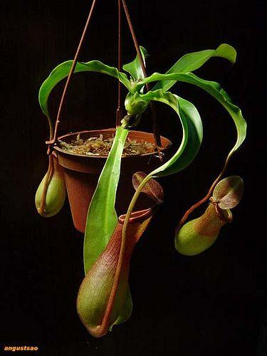 plant_063.jpg