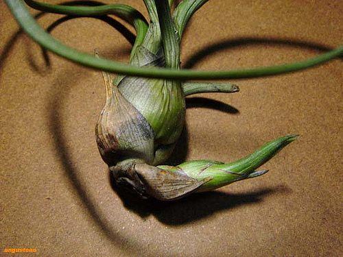plant_134.jpg