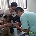 帶狗去台大醫院健診(我左一)