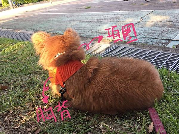 狗狗走失怎麼辦.jpg
