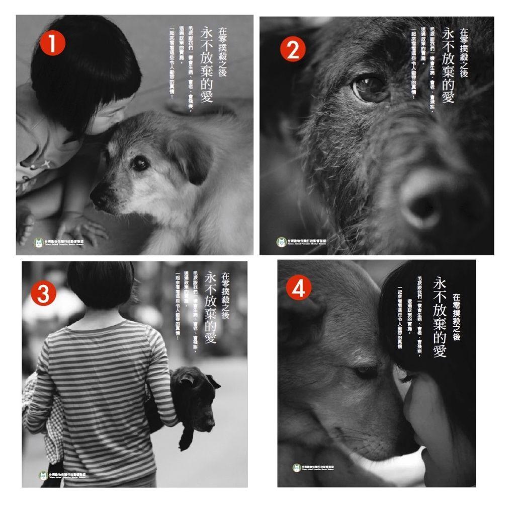 網路票選:「永不放棄的愛」封面 拷貝.jpg