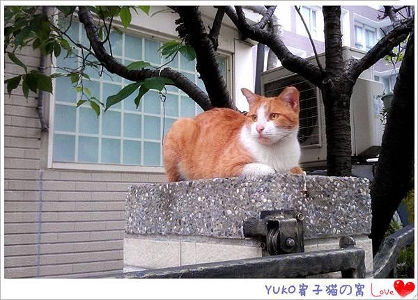 IMAG4379_副本