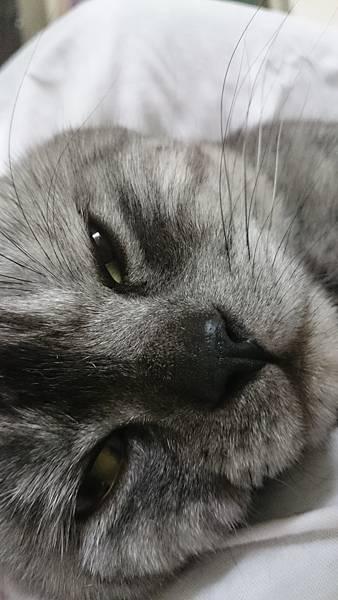 偷拍Grey睡覺