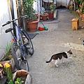 跟著一隻貓的腳步走