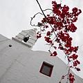 九重葛與白教堂