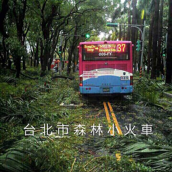 台北市森林小火車/侏儸紀遊園車