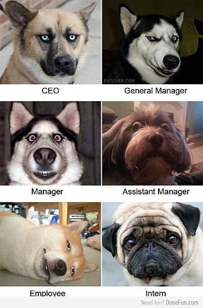 DOG CEO