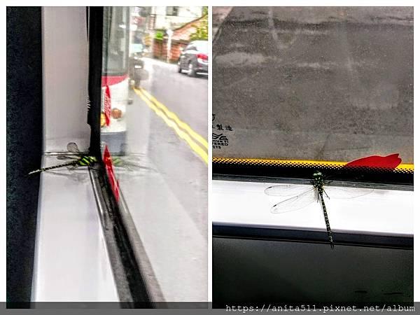 公車上的蜻蜓