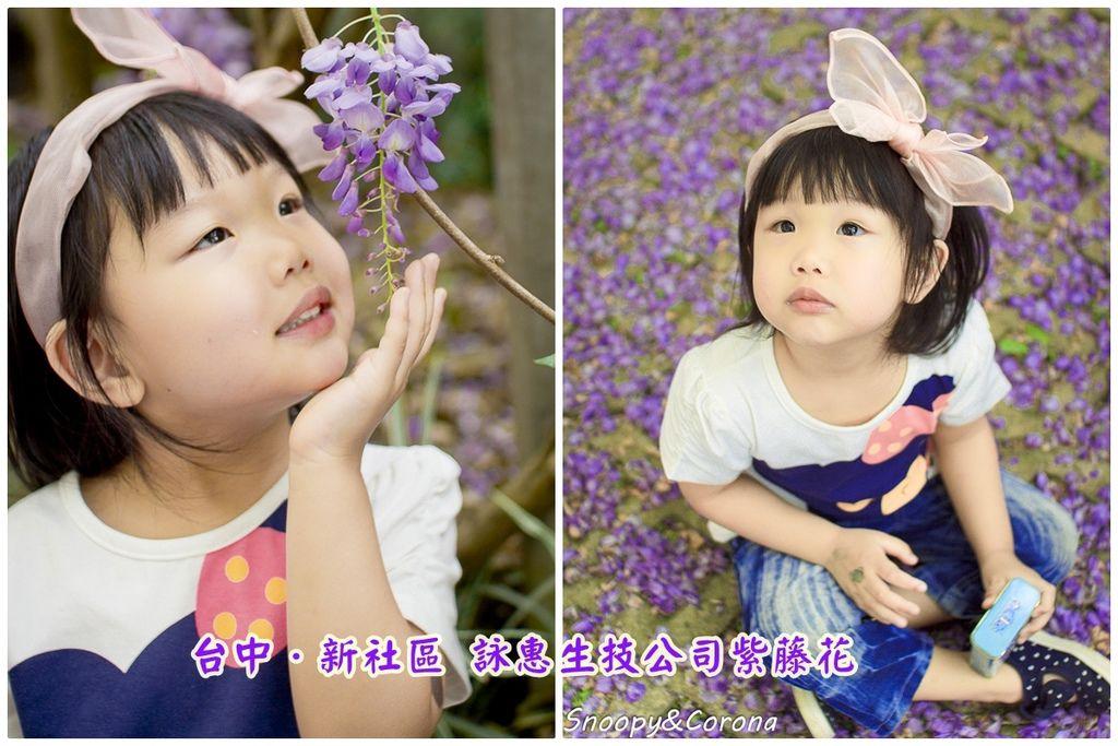 紫藤封面.jpg
