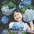 繡球花封面.jpg
