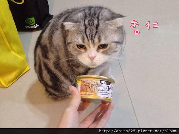 Mama Mia貓罐頭】+【夏拉霏貓旅住宿卷】