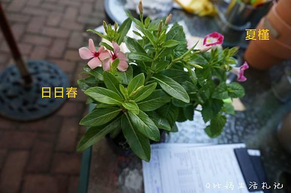 DSC07794_副本.jpg